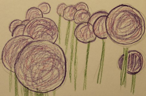 Allium-sketch