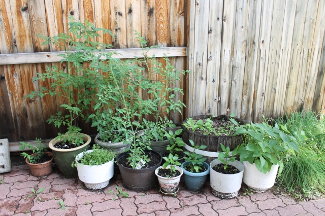 Our Garden July 13 2016 - 10
