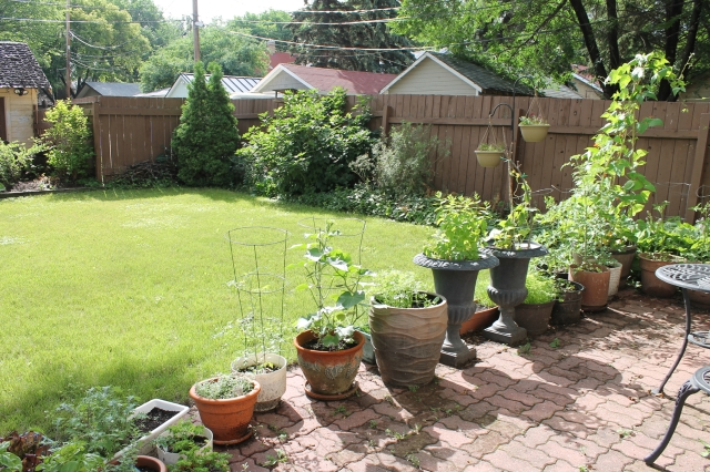 Our Garden July 13 2016 - 12