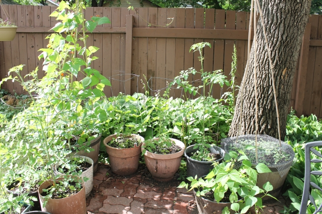Our Garden July 13 2016 - 13