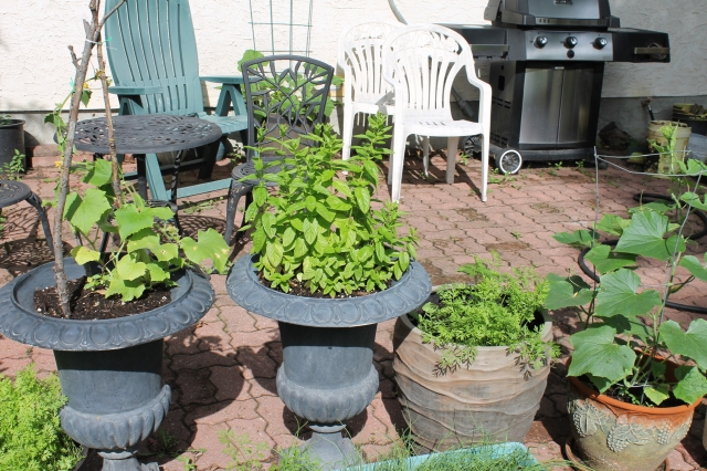 Our Garden July 13 2016 - 4